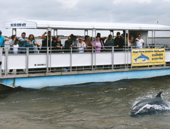 Private Chartered Dolphin Cruises