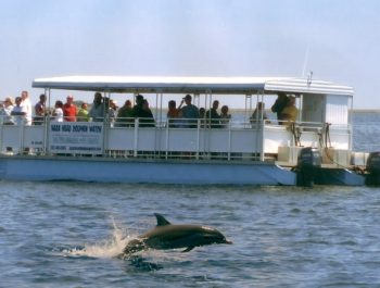 nags-head-dolphin-tour