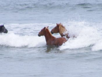 wild horse tours outer banks nc