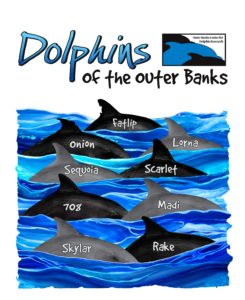 2018 dolphin tshirt design 245x300 - Outer Banks Center for Dolphin Research